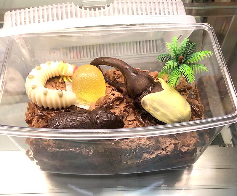 [まちのくまさん]カブトムシケーキ、ご予約受付中!